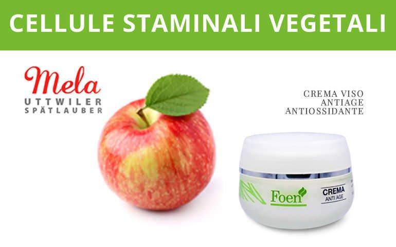 cellule staminale vegetali da mela svizzera